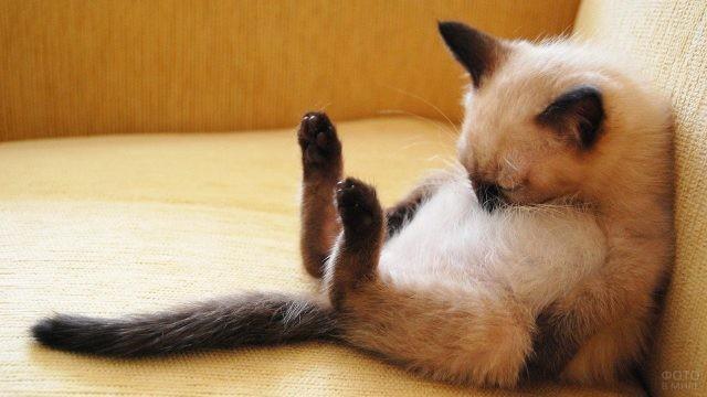 Кот положит голову на пузо