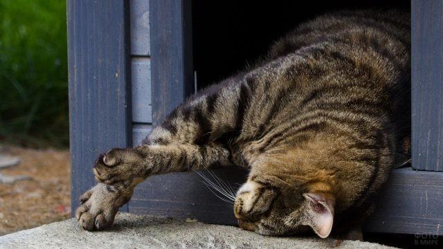 Кот вывалился из будки