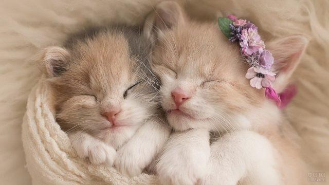 Котята спят рядом