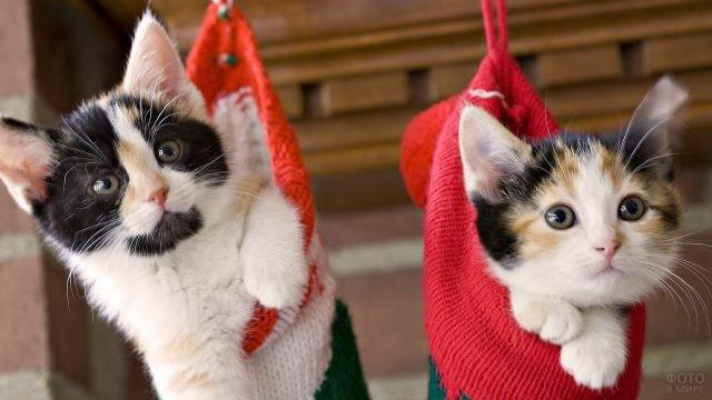 Котята в новогодних носках