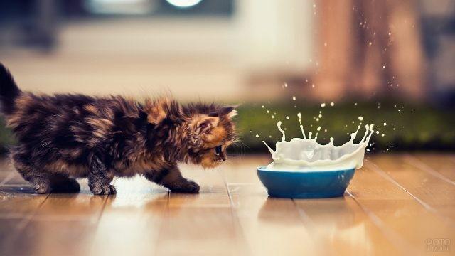 Котёнок возле миски с молоком