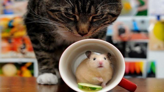 Мышь в кружке рядом с кошкой