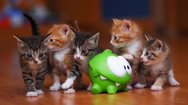 Пять котят возле игрушки
