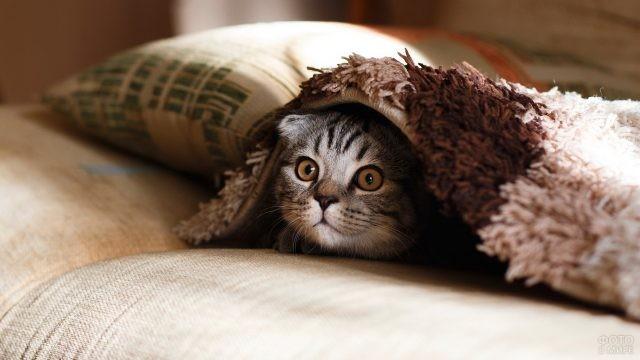 Прикольная кошка под покрывалом