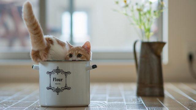 Прикольный кот в кастрюле