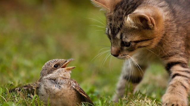 Птица и котёнок на траве