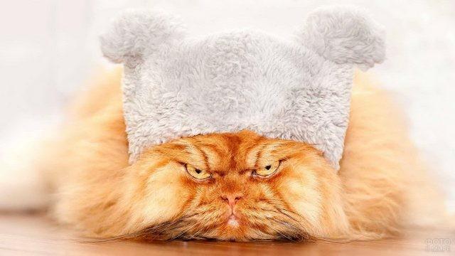 Сердитый перс в шапке