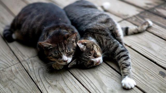 Спящие кошки на деревянном настиле