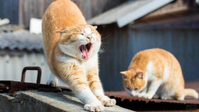 Уличная кошка вытянулась рядом с котом
