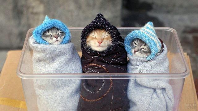 Замотанные котята в ящике