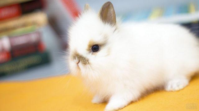 Белый кролик с короткими ушками