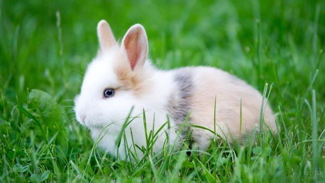 Декоративный кролик сидит на траве