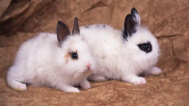 Два декоративных белых кролика