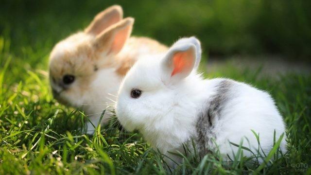 Два декоративных кролика сидят на траве