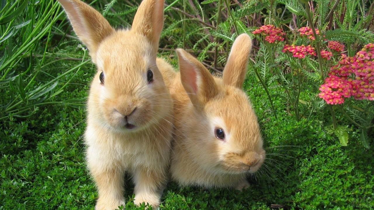 Два кролика на зелёной траве