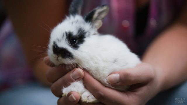 Карликовый кролик на руках человека