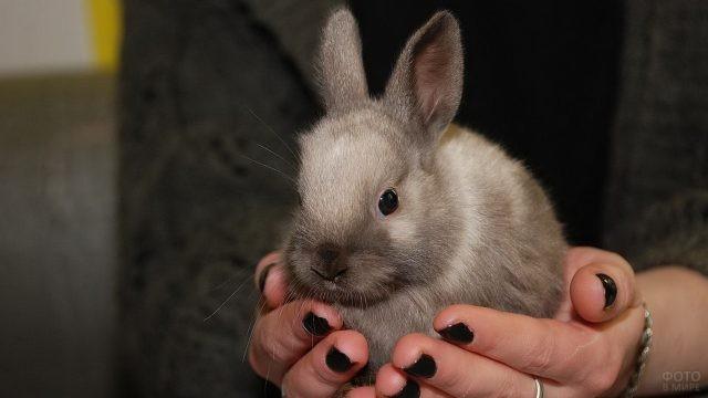 Карликовый кролик в руках человека