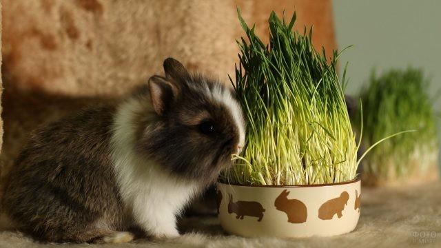 Маленький кролик ест траву