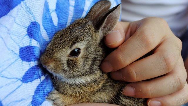 Малыш кролик прижался к человеку