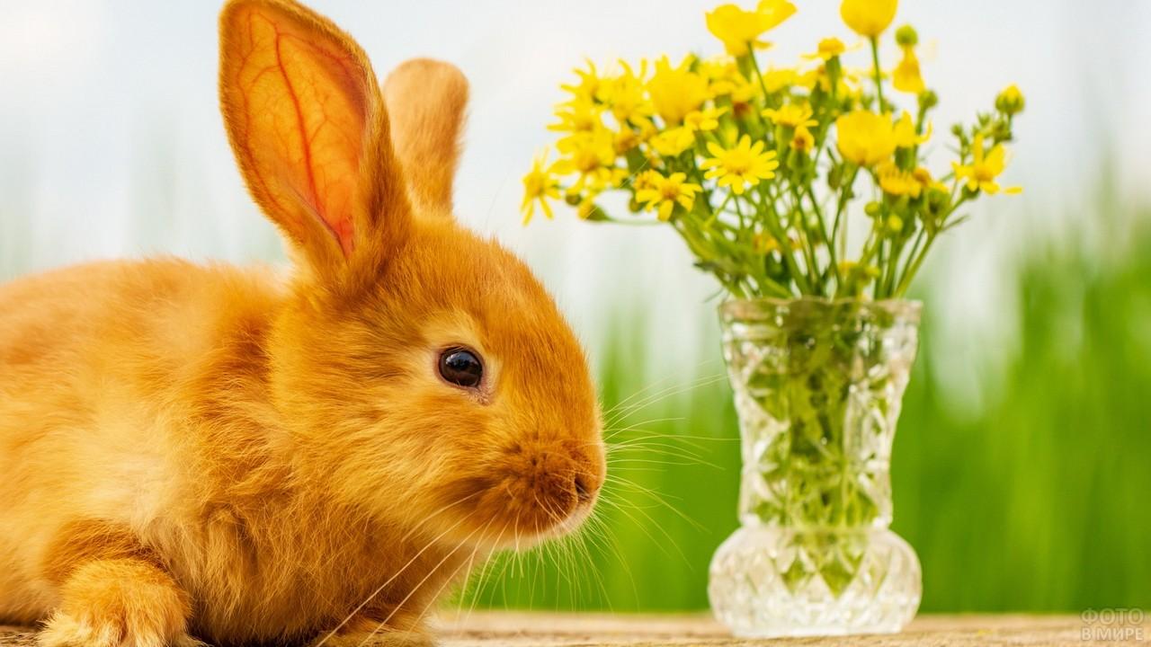 Рыжий кролик с вазой цветов