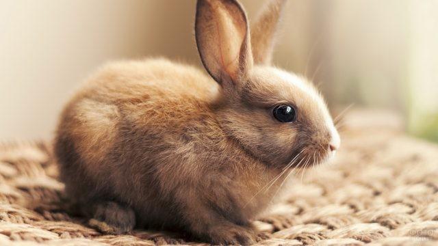 Зайчик сидит на плетёном коврике