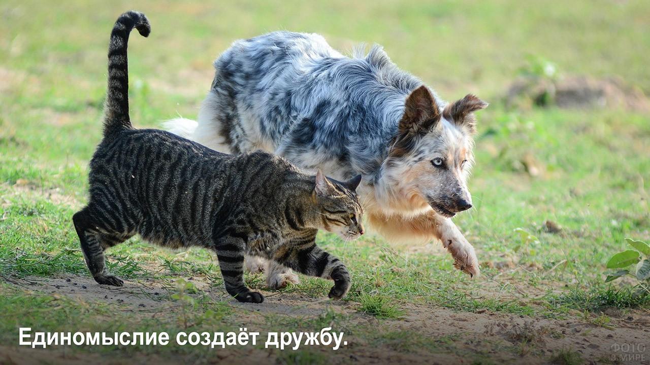 Единомыслие создаёт дружбу - кот и пёс