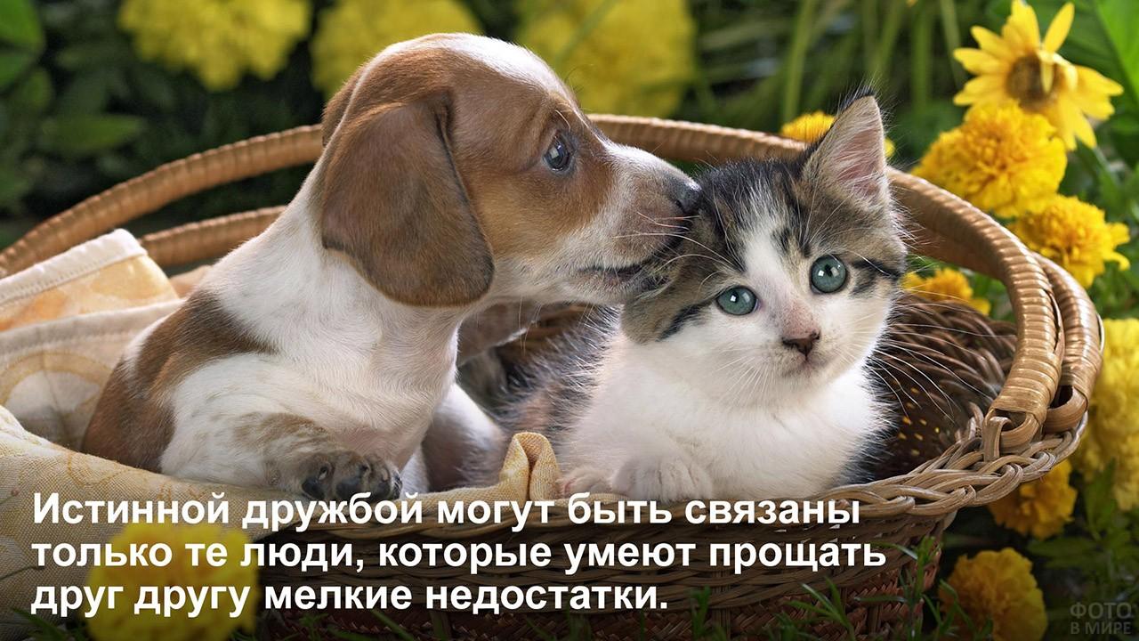 Прощать друг другу недостатки - котёнок и щенок