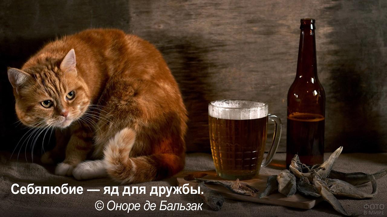Себялюбие - яд для дружбы - кот клянчит рыбу