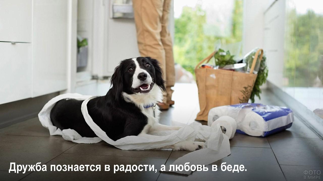 В радости и в беде - собака сгрызла рулон