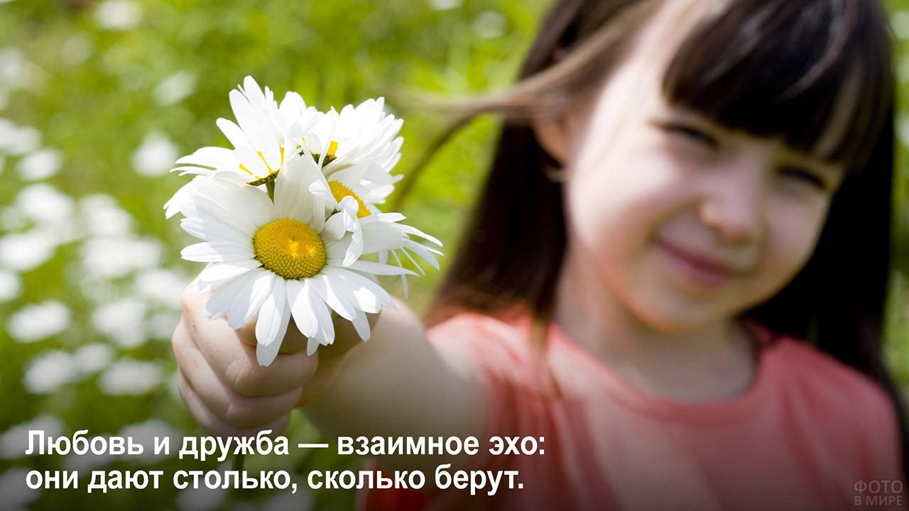 Взаимное эхо любви и дружбы - девочка с ромашками