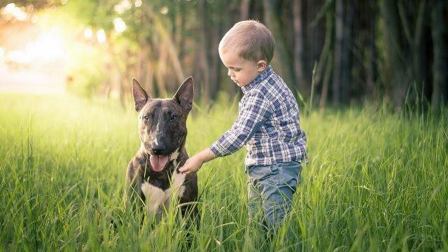 Мальчик даёт травинку собаке на лугу