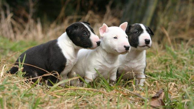 Милые щенки смотрят в сторону