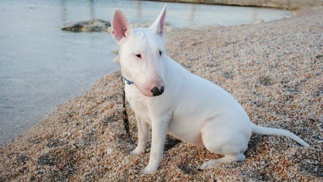 Отдыхающая собака на мелких камнях возле водоёма