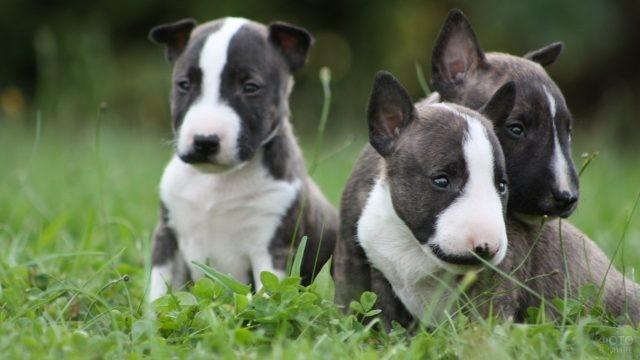 Щенки породистой собаки на газоне из клевера
