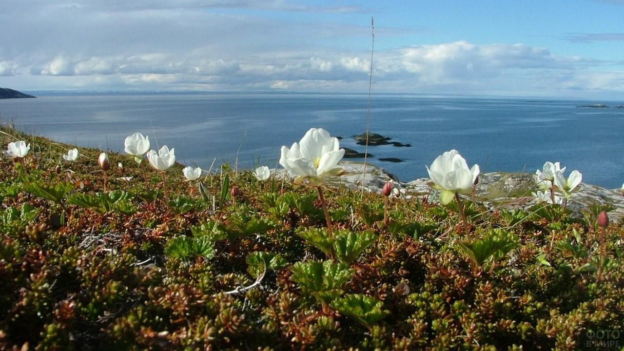 Белые цветы на острове у моря