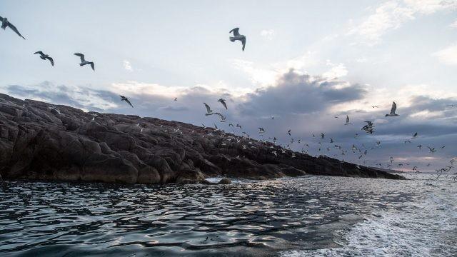 Чайки летят над морем
