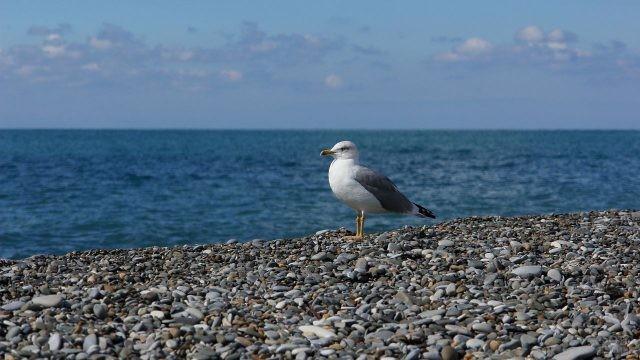 Красивая чайка сидит на каменной набережной у моря
