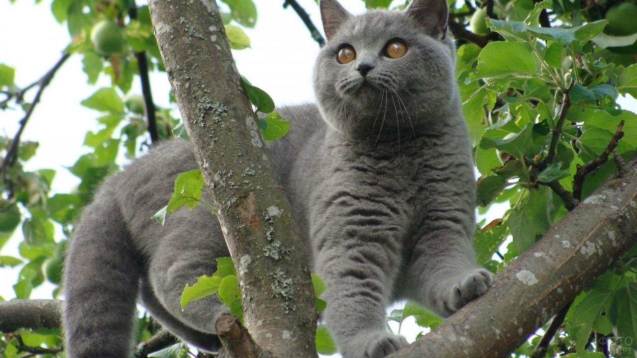 Британец на дереве