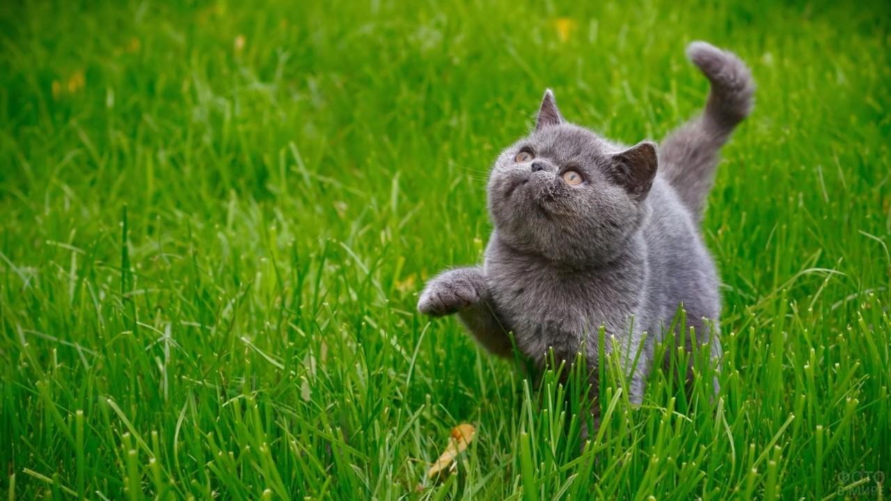 Довольный кот идёт по траве