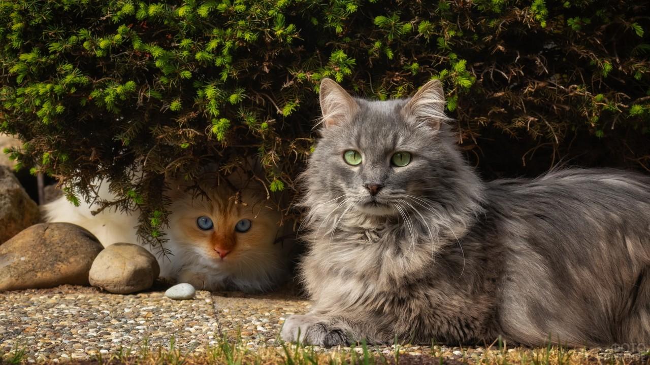 Две кошки прячутся у кустов