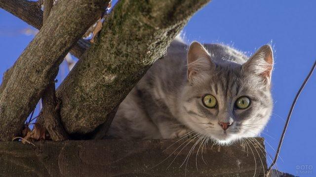 Хищная кошка возле веток