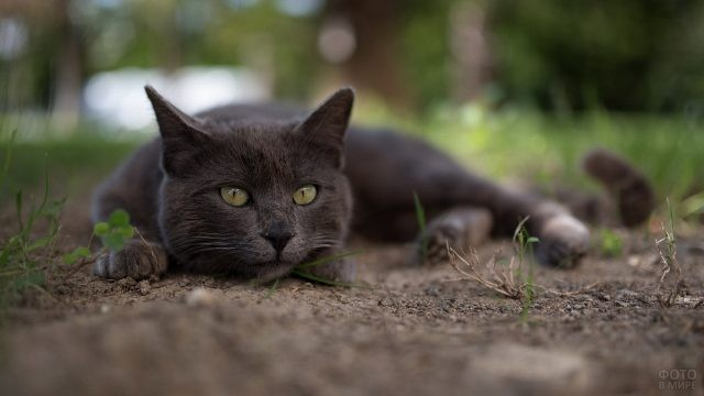 Кошка лежит на земле