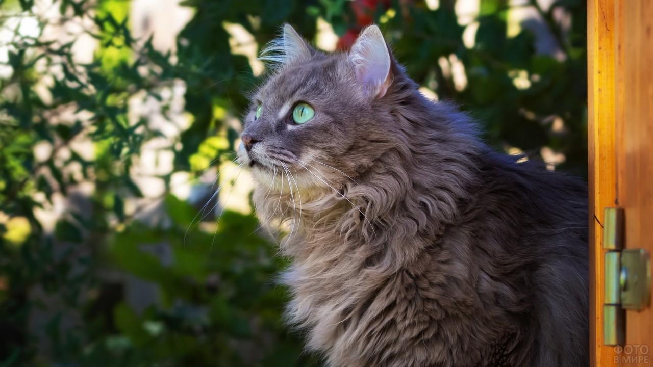 Кошка смотрит вверх