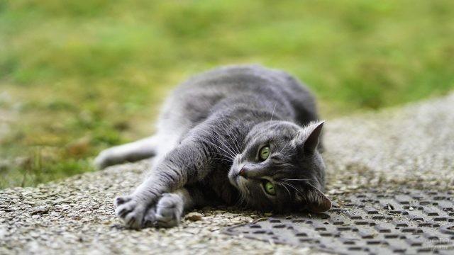 Кошка валяется на тротуаре