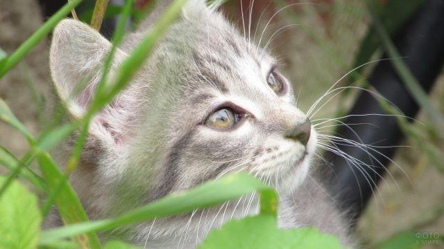 Котёнок смотрит вверх