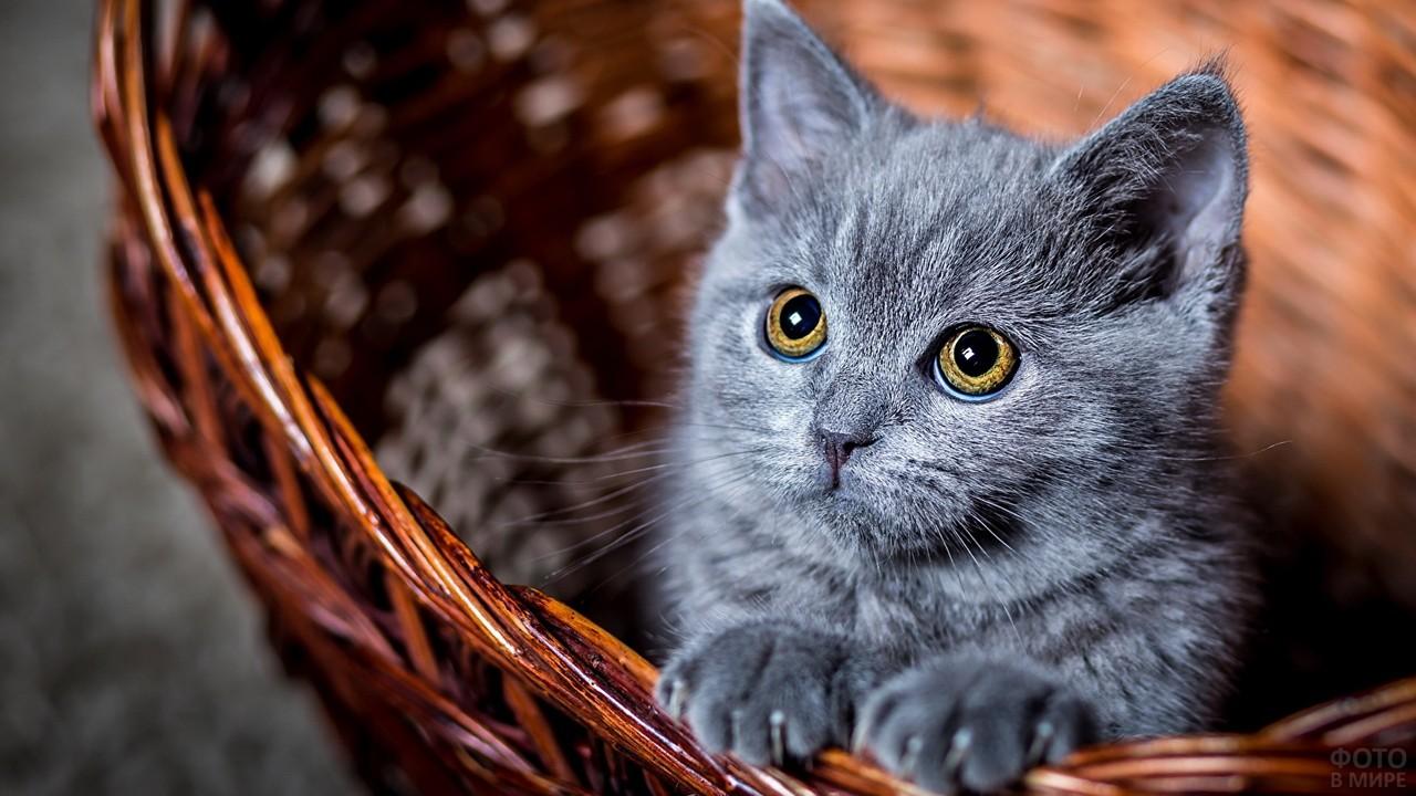 Котёнок в плетёной корзине