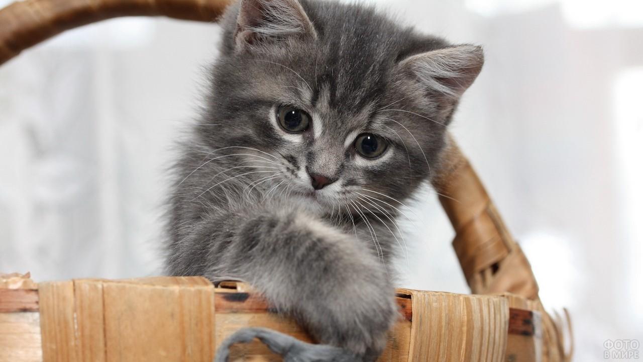 Котёнок высунулся из корзины