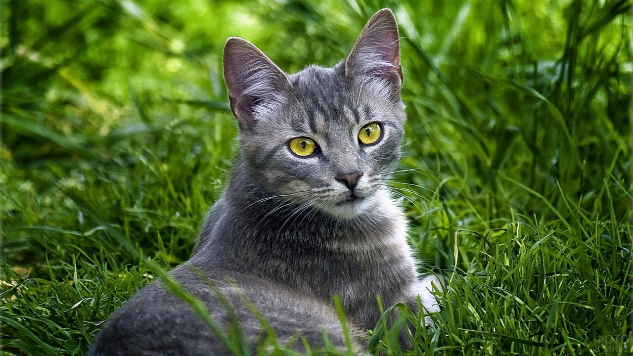 Красивая кошка в траве