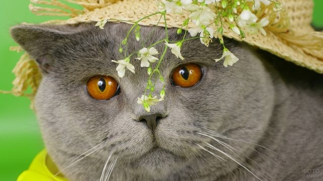 Милая кошка в соломенной шляпе