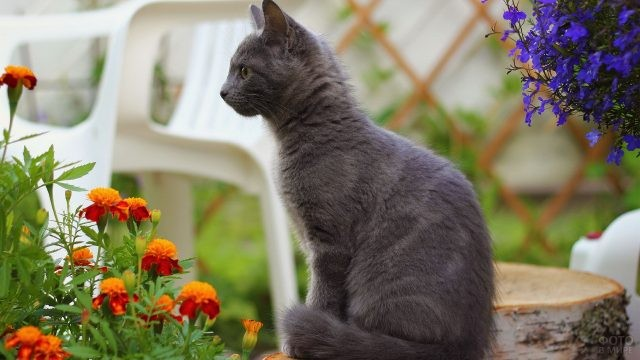 Молодая кошка среди цветов